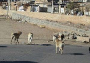 بی توجهی مسئولین و جولان سگ های ولگرد در خاوران